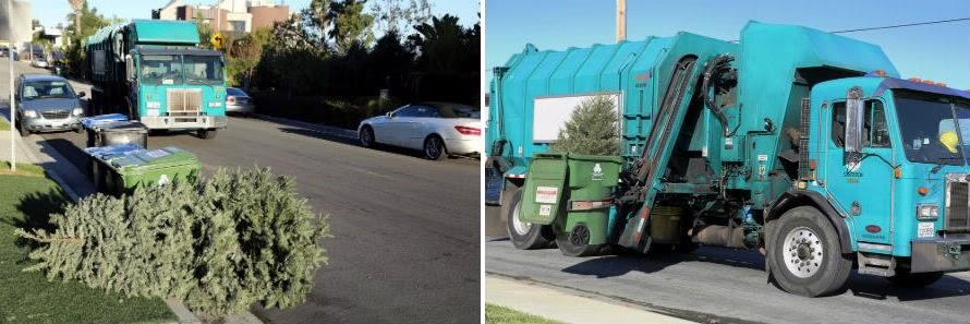 X-mas Tree Disposal